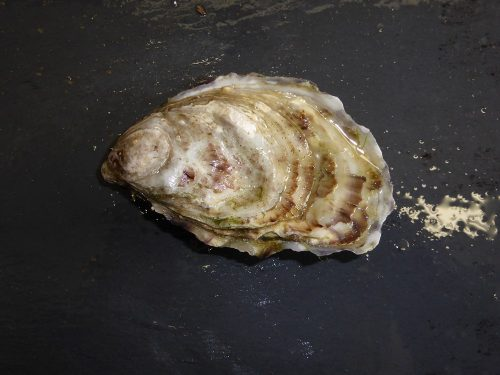 Ready to eat oyster